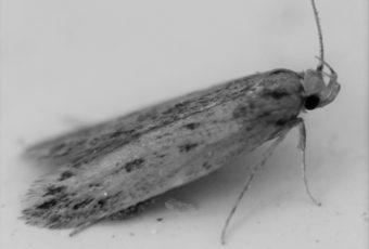 Extermination de mites à Montréal